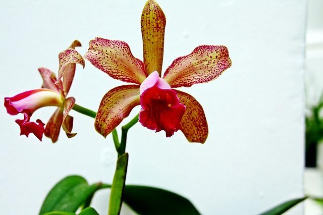 Barevná orchidej
